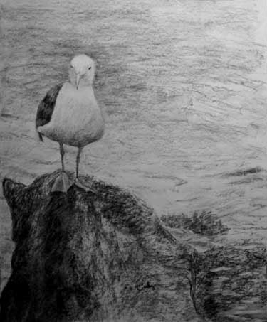 Seagull - charcoal drawing