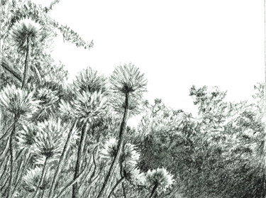 Pencil drawing of chive patch