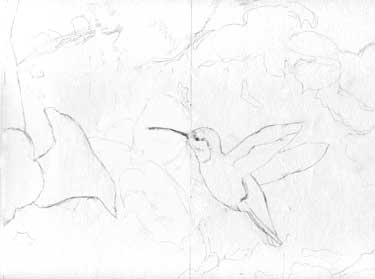 Pencil sketch of hummingbird